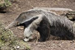 Zoo Duisburg 210810 - IMG_0734-2