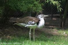 Zoo Duisburg 210810 - IMG_0744