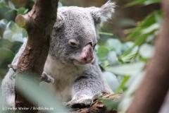 Zoo Duisburg 210810 - IMG_0784-2
