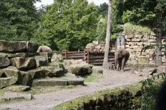 Zoo_Emmen_070915_IMG_7428_0117