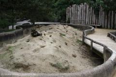 Zoo_Emmen_070915_IMG_7483_0195