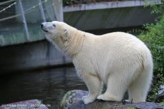 Zoo_Emmen_070915_IMG_7511