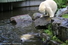 Zoo_Emmen_070915_IMG_7517