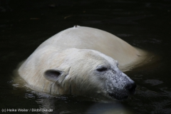 Zoo_Emmen_070915_IMG_7519