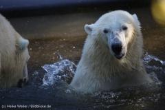 Zoo_Emmen_070915_IMG_7568