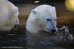 Zoo_Emmen_070915_IMG_7572