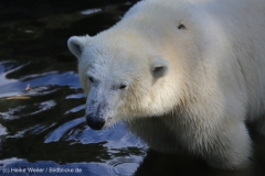 Zoo_Emmen_070915_IMG_7601