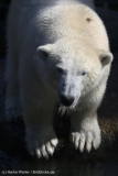Zoo_Emmen_070915_IMG_7608