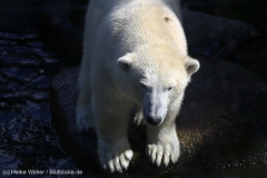 Zoo_Emmen_070915_IMG_7610