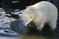 Zoo_Emmen_070915_IMG_7618