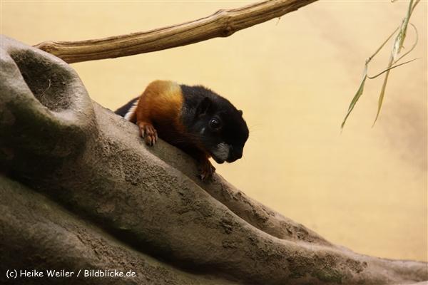 Zoo_Frankfurt_010812_IMG_0737