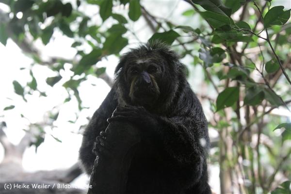 Zoo_Frankfurt_010812_IMG_0764