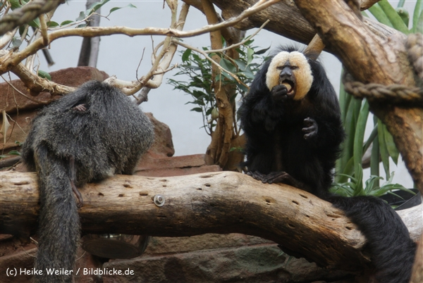 Zoo_Frankfurt_010812_IMG_0889
