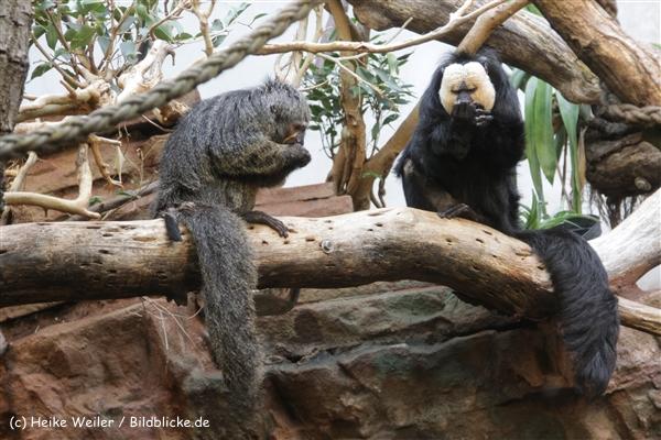 Zoo_Frankfurt_010812_IMG_0899-2