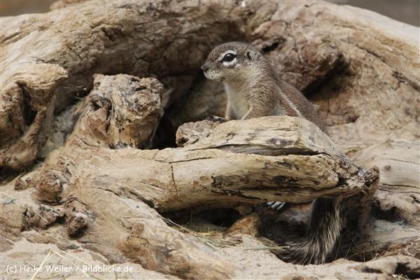 Zoo_Frankfurt_010812_IMG_0960