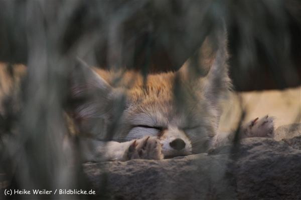 Zoo_Frankfurt_010812_IMG_1058