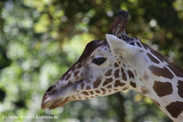 Zoo_Frankfurt_010812_IMG_1073