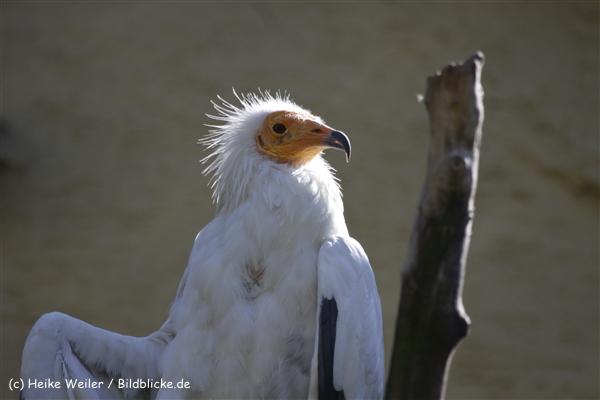 Zoo_Frankfurt_010812_IMG_1125
