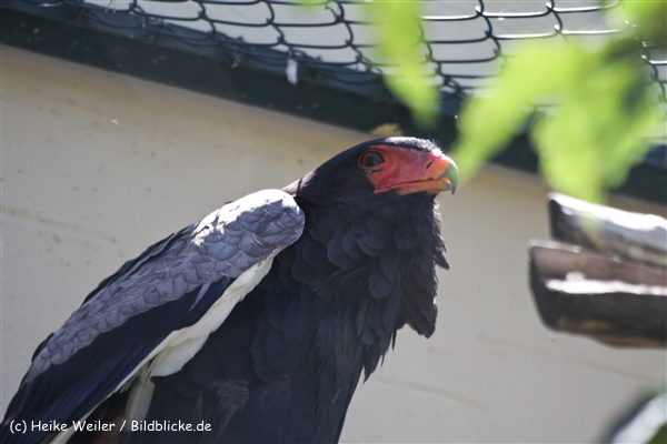 Zoo_Frankfurt_010812_IMG_1138