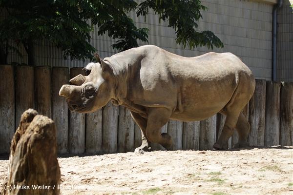 Zoo_Frankfurt_010812_IMG_1164