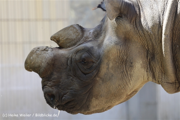 Zoo_Frankfurt_010812_IMG_1171