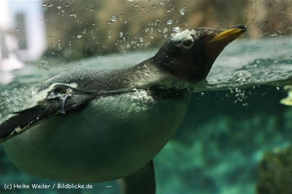 Zoo_Frankfurt_010812_IMG_1190
