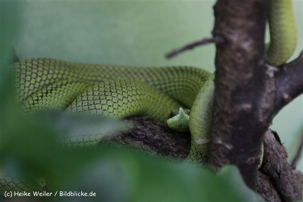 Zoo_Frankfurt_010812_IMG_1221