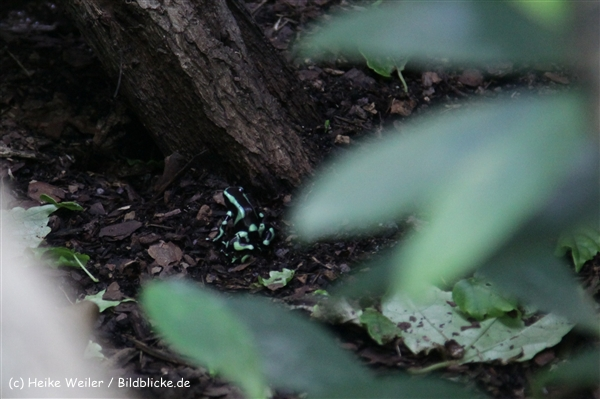 Zoo_Frankfurt_010812_IMG_1280