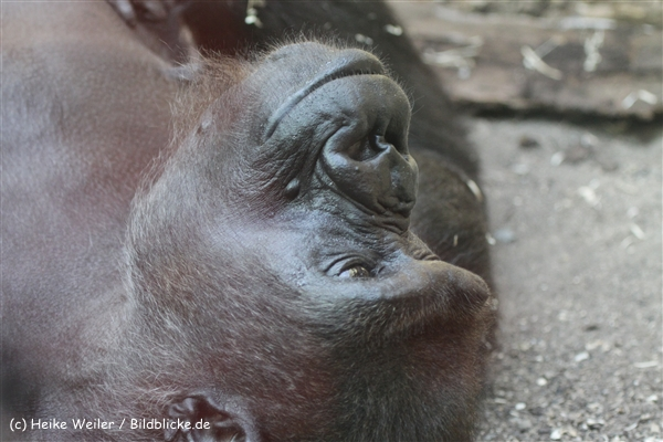 Zoo_Frankfurt_010812_IMG_1453