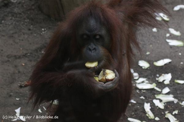 Zoo_Frankfurt_010812_IMG_1460