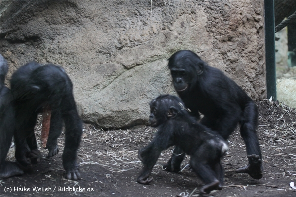 Zoo_Frankfurt_010812_IMG_1513