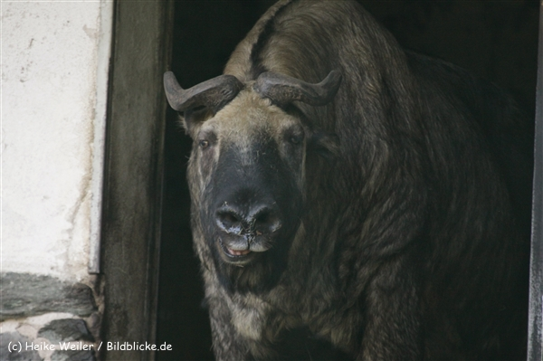 Zoo_Frankfurt_010812_IMG_1532