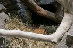 Zoo_Frankfurt_010812_IMG_0731
