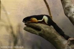 Zoo_Frankfurt_010812_IMG_0745-2