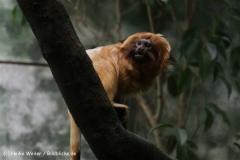Zoo_Frankfurt_010812_IMG_0786