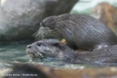 Zoo_Frankfurt_010812_IMG_0871