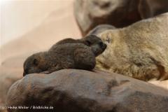 Zoo_Frankfurt_010812_IMG_0976