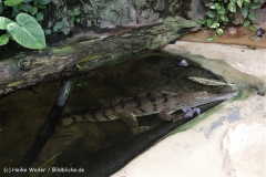 Zoo_Frankfurt_010812_IMG_1328