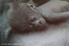 Zoo_Frankfurt_010812_IMG_1452