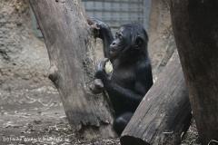 Zoo_Frankfurt_010812_IMG_1461-2