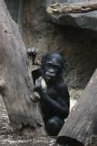 Zoo_Frankfurt_010812_IMG_1464