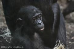 Zoo_Frankfurt_010812_IMG_1497