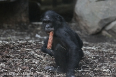 Zoo_Frankfurt_010812_IMG_1506