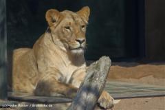 Zoo-Halle-190909-IMG_4591