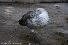 Zoo-Halle-190909-IMG_4666