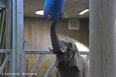 Zoo-Halle-190909-IMG_4686