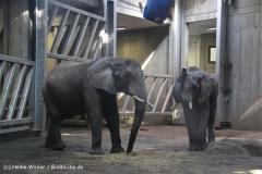 Zoo-Halle-190909-IMG_4695