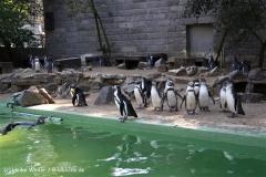 Zoo-Halle-190909-IMG_4811