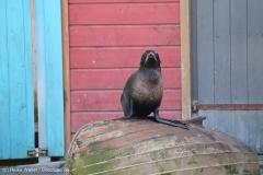 Zoo_Hannover_010416_IMG_0346