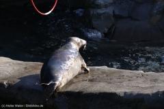 Zoo_Hannover_010416_IMG_0398